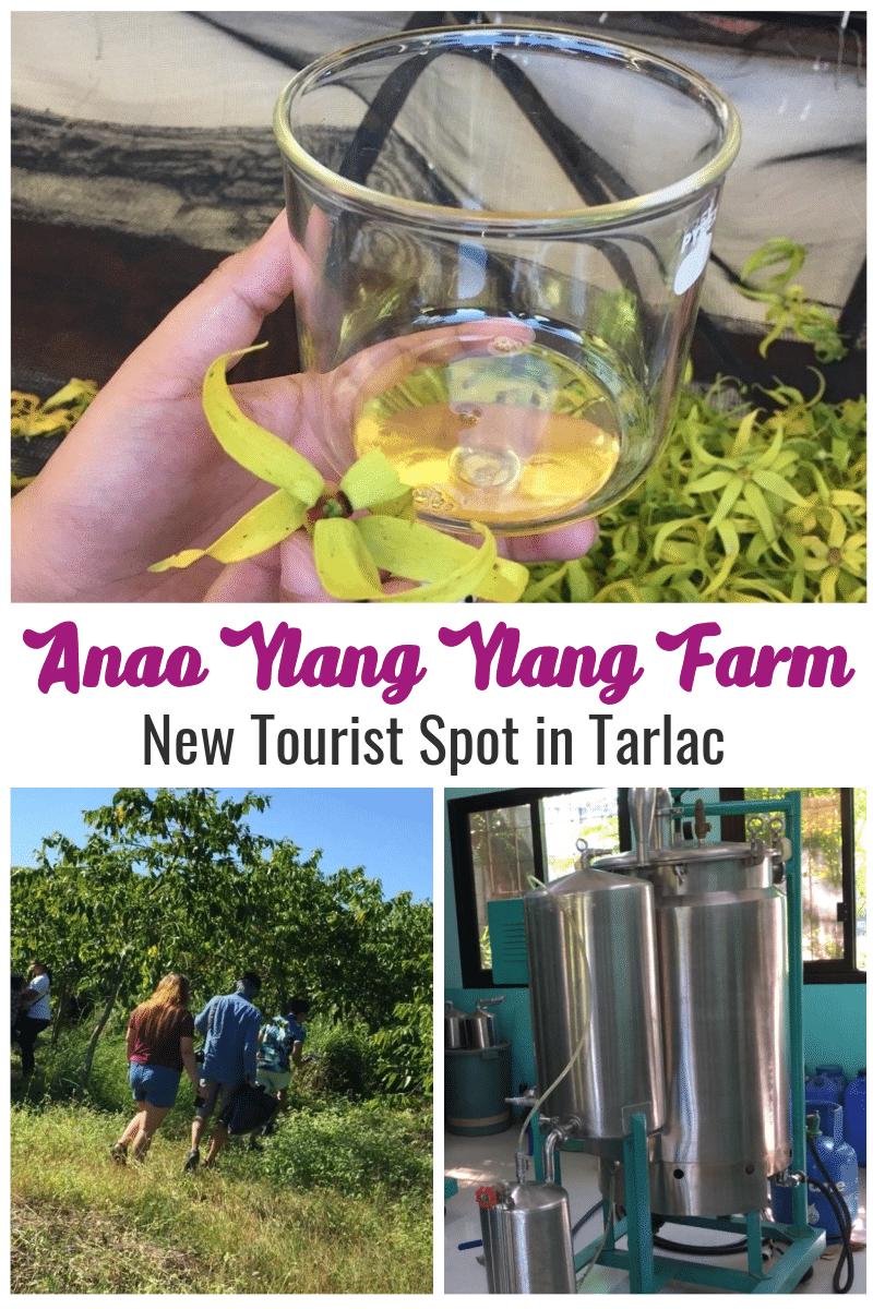 Anao Ylang Ylang Farm and Anao Ylang Ylang Center - tarlac city philippines